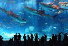 Открытие Приморского океанариума