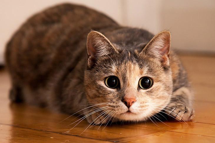 Корм для кошек – на любой вкус