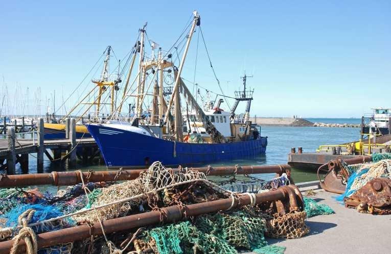 рыбная отрасль