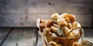 Россиянам могут разрешить продавать собранные ягоды и грибы